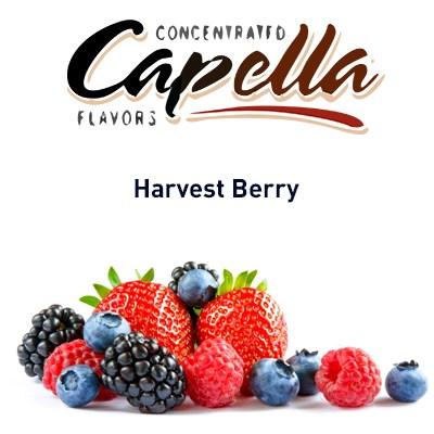 Capella Harvest Berry - фото 7107